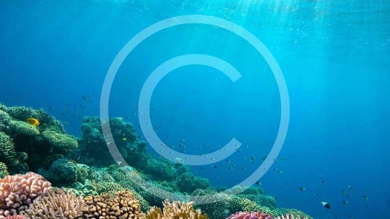 Global Warming's Evil Twin: Ocean Acidification